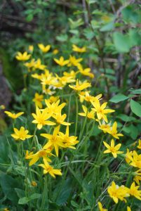 Wildflowers Bloom Near Trail