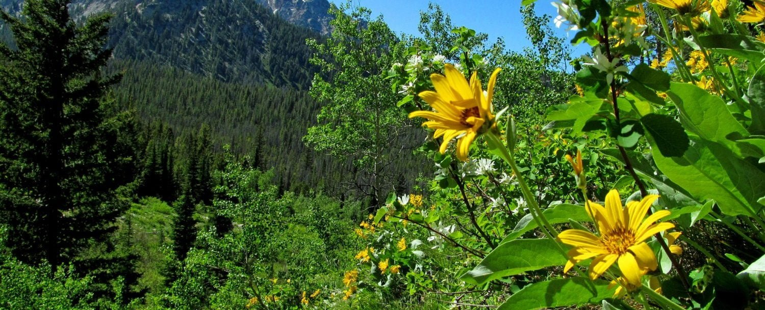 view of spring in the Sawtooth National Forest while Hiking